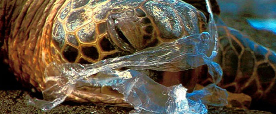 Sea turtles: plastic is deadlier than climate change