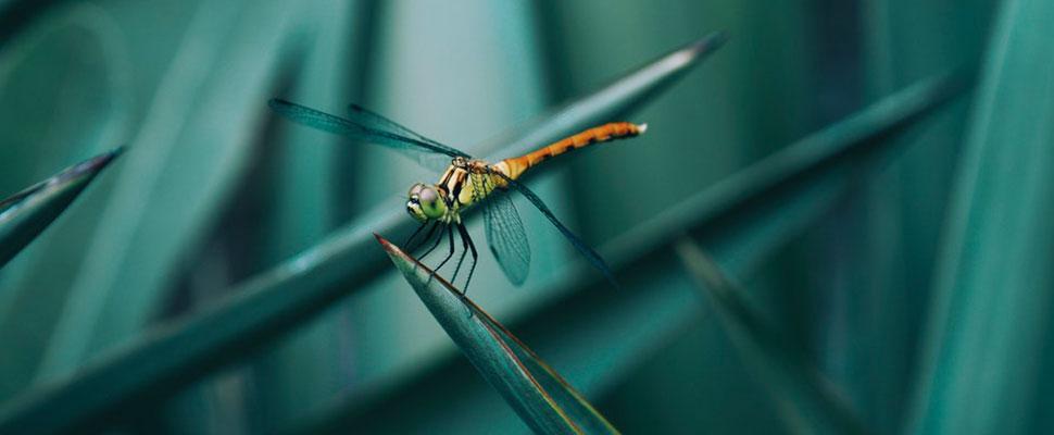 ¡No se deje engañar por su tamaño! Los insectos pueden ser los animales más letales