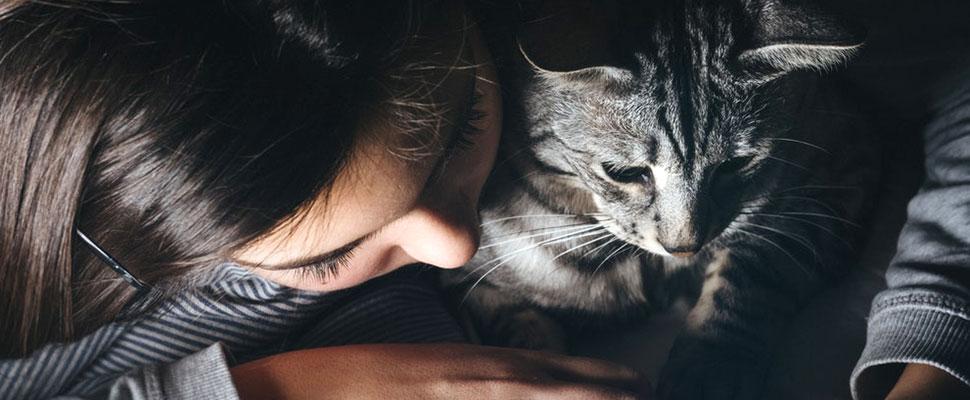Los gatos sufren de SIDA: ¿te pueden contagiar?