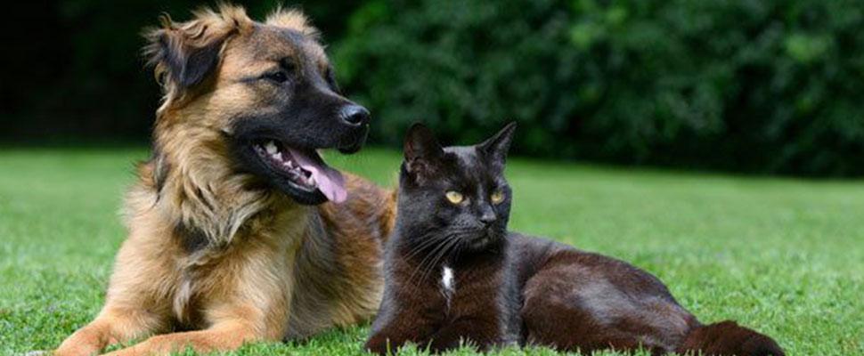 5 tips para ser un dueño de mascota más amigable con el medio ambiente