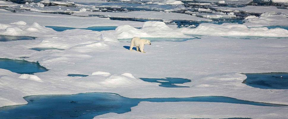 La trágica realidad del deshielo polar