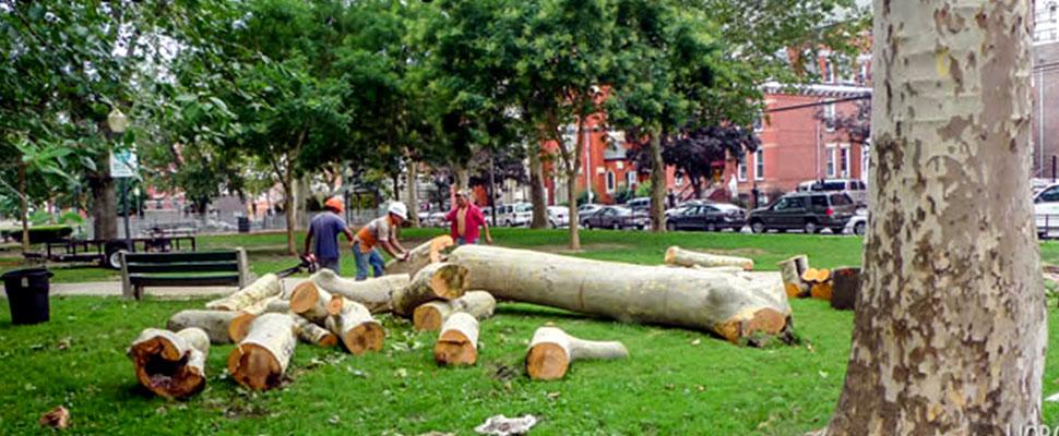 Poda urbana: ¿una práctica necesaria o un atentado contra los árboles?