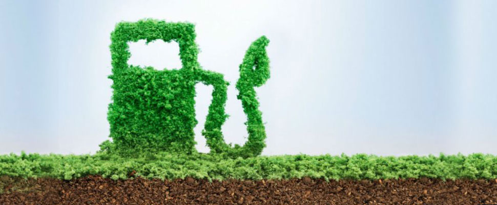 These are the real environmental impacts of biofuels