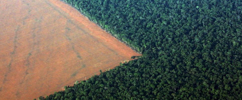 Deforestación: Colombia enfrenta una grave problemática estatal