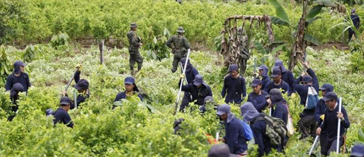 Colombia is still the world's biggest producer of cocaine