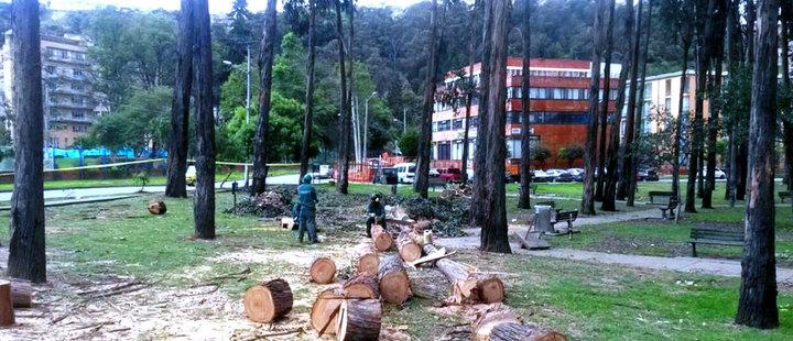 Bogotá: Así va la indiscriminada tala de árboles