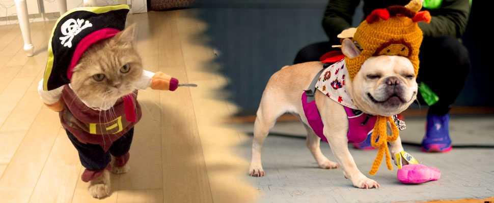 Halloween DIY: 5 costumes for your pet