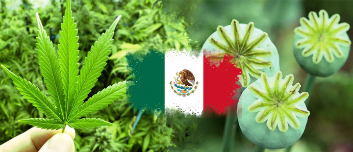 Why should marijuana and poppy be legalized in Mexico?