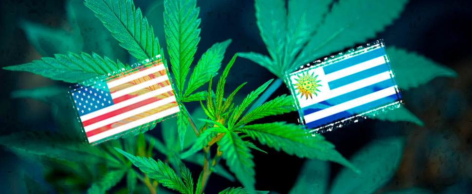 Así le ha ido a Uruguay y Colorado tras legalizar la marihuana
