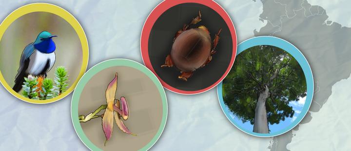 Descubre estas 4 nuevas especies encontradas en lo que va del año
