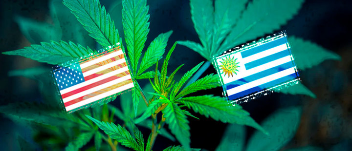 How are Uruguay and Colorado doing after legalizing marijuana?