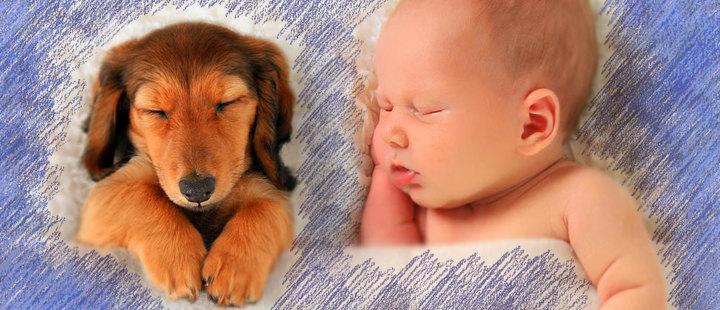 ¿Mascotas y bebés? 6 sencillos pasos para presentarlos
