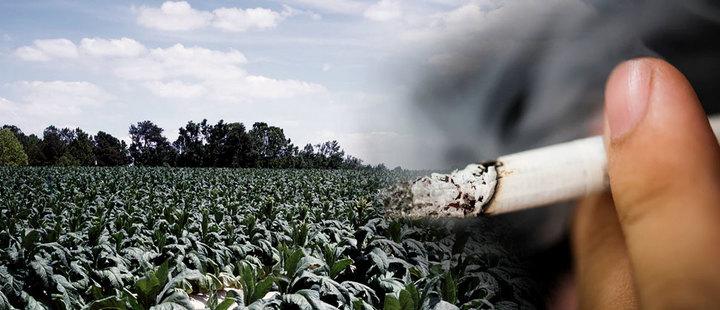 La nueva estrategia de las tabacaleras no es hipocresía, es la reinvención de su negocio