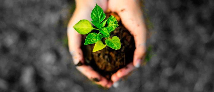 Hoy celebramos el día mundial del suelo
