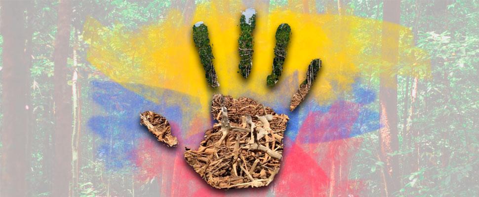 A frenar la deforestación en Colombia