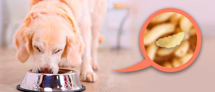 Nueva comida de perros promete salvar el planeta