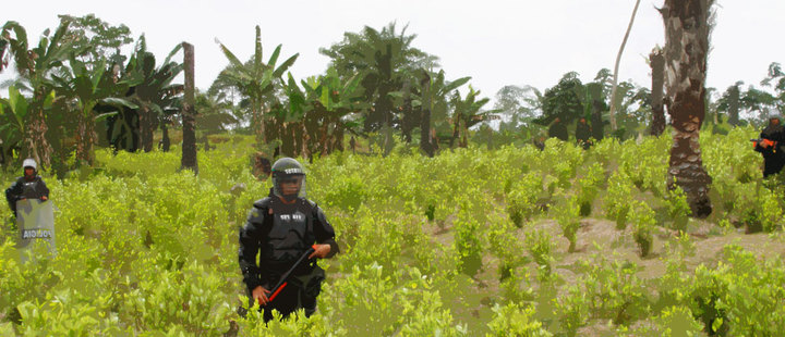 Colombia: the substitution of illicit crops it's not an easy task