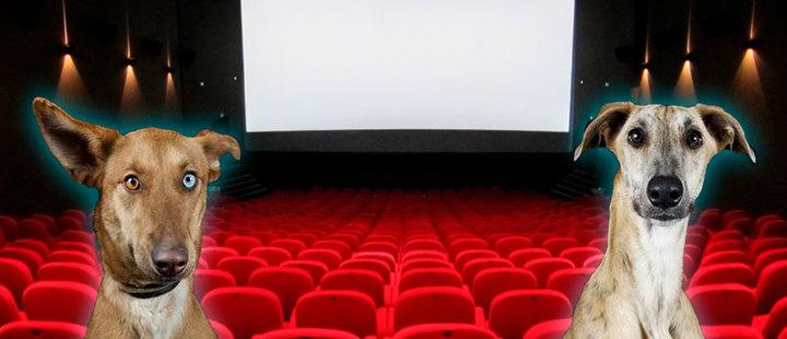 Cine para perros: K9 Cinemas lo hace posible