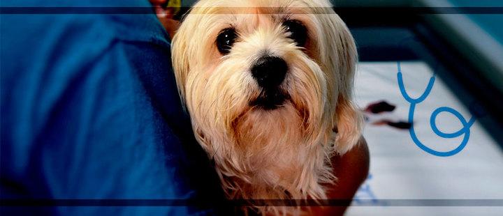 7 beneficios de esterilizar a tu mascota
