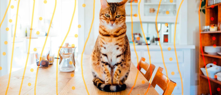 ¿Por qué es mejor que los gatos vivan dentro de casa?