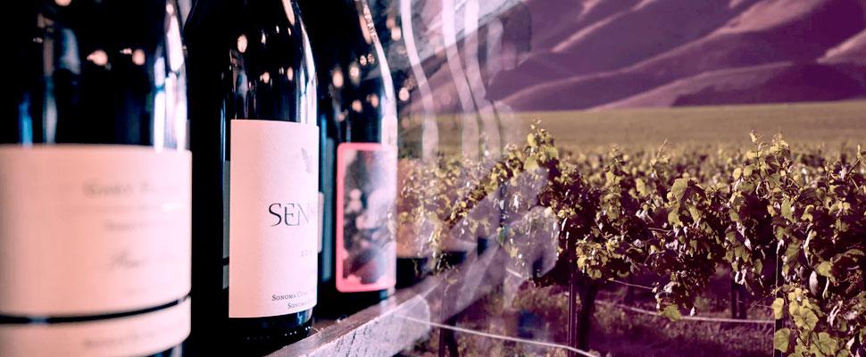 Enoturismo: la ruta de los mejores vinos de Latinoamérica