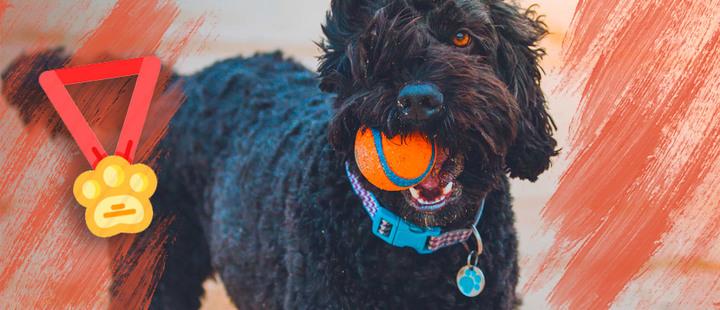 ¿Qué tipo de identificación es mejor para tu mascota?