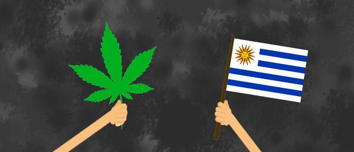Cannabis en Uruguay: un mercado potencial