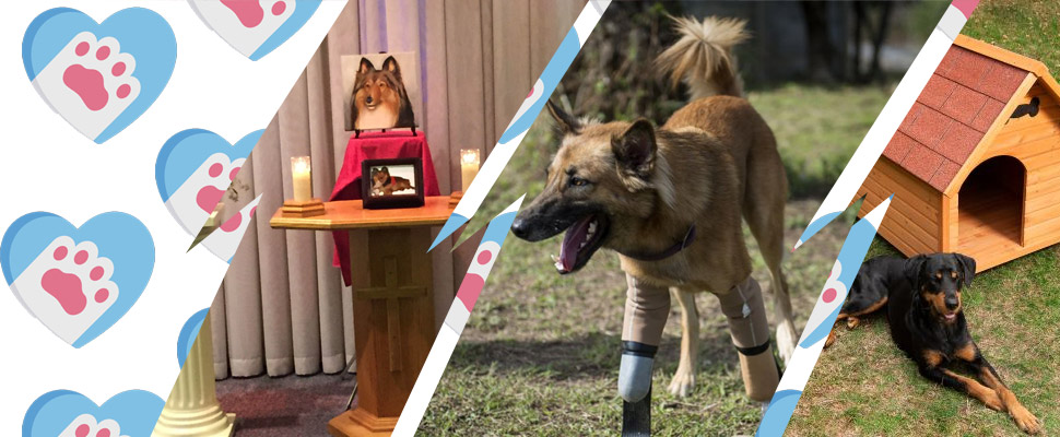 5 incredible services specialized for pets