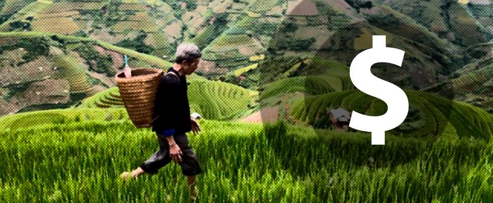Medio ambiente y dinero: así es la agricultura en China