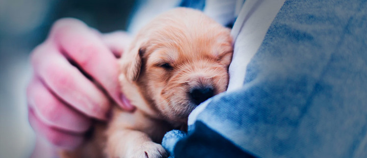 What care does your new puppy need?