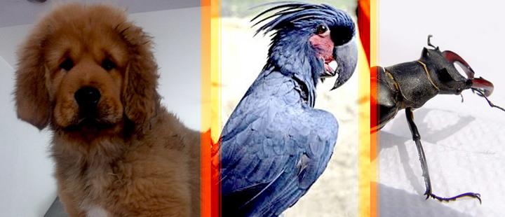5 de las mascotas más caras del mundo