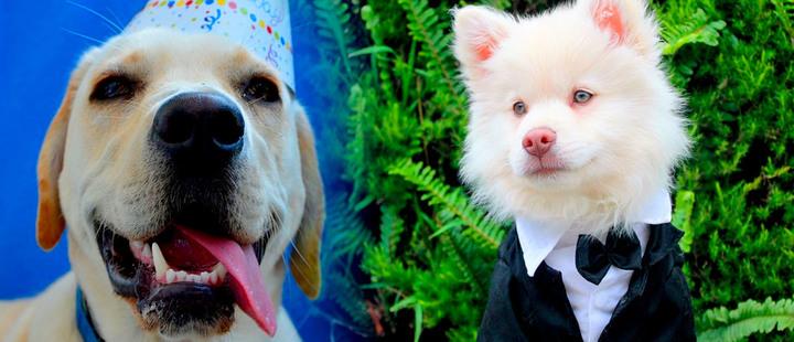 ¿Estás humanizando a tu perro?