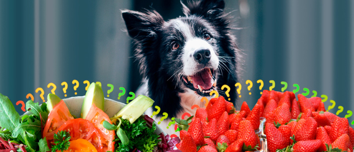Perros y comida