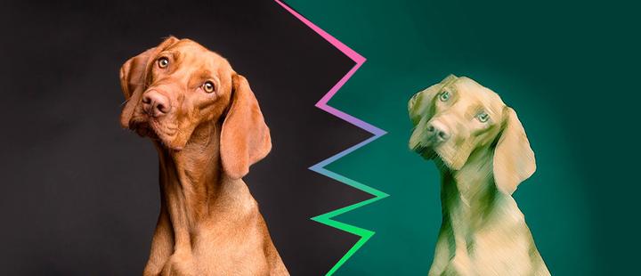 La clonación comercial de mascotas