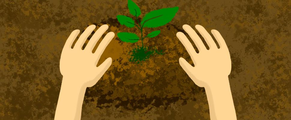Necesitamos más árboles: ¿cómo plantar uno?