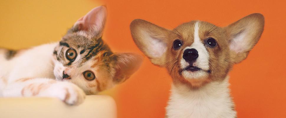 5 tips que debes seguir para elegir la mascota ideal