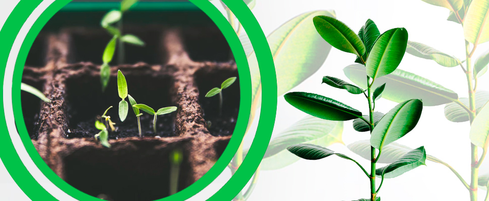 ¿Qué es la ceguera de las plantas y cómo curarla?