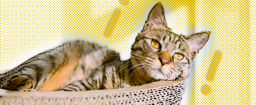 These are 3 of the most common diseases in cats. You can prevent them