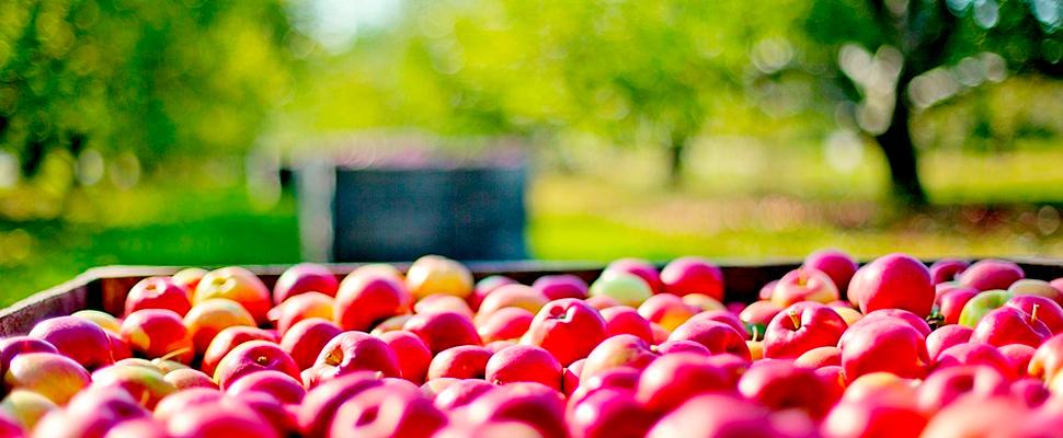 Full box of apples