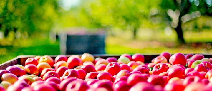 Manzanas, té y moderación: los 3 ingredientes para una larga vida