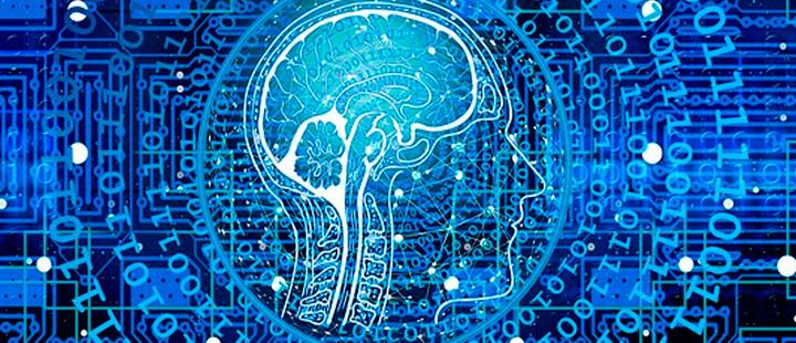 Comprender el cerebro animal podría ayudar a los robots a lavar tus platos
