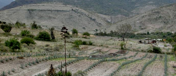 The archaeological site of El Palmillo with cultivated fields in the foreground;