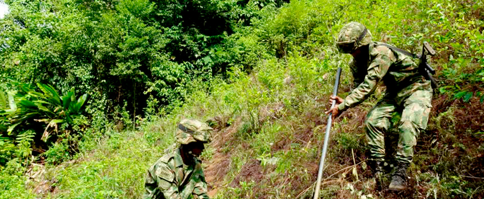 Dos soldados trabajando en un cultivo de coca.