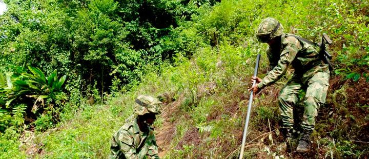 Two soldiers working in a coca crop.