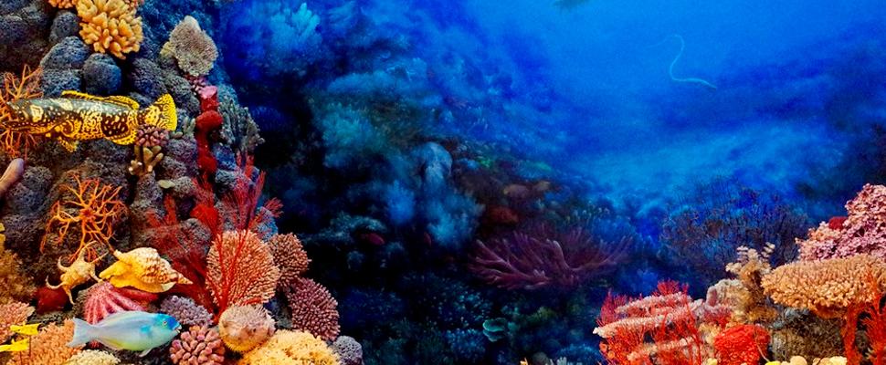 Impresiones 3D podrían ayudar a los arrecifes en peligro de extinción