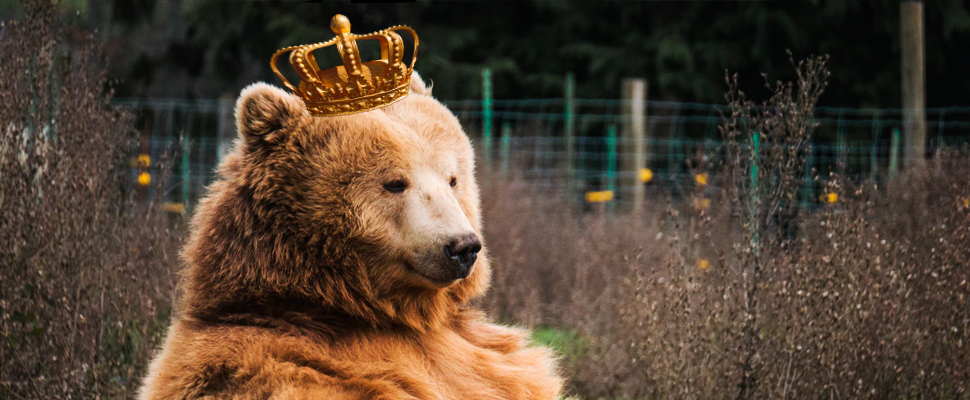 Bear sitting with a crown on his head.