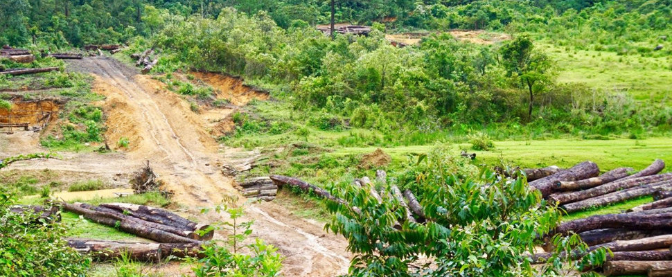 Forest degradation through selective logging.