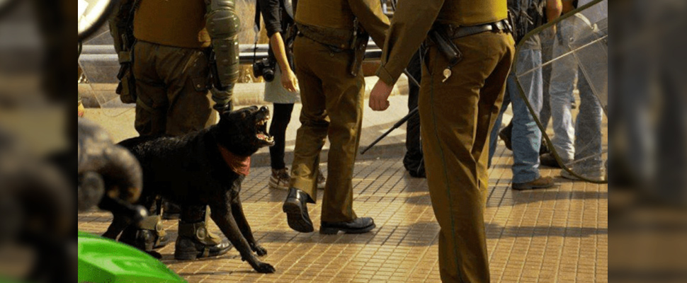 Mixed black dog 'Matapacos' barking at police during protests in Chile.