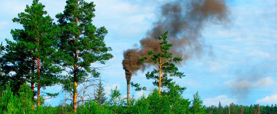 La naturaleza sería mejor que la tecnología para reducir la contaminación del aire
