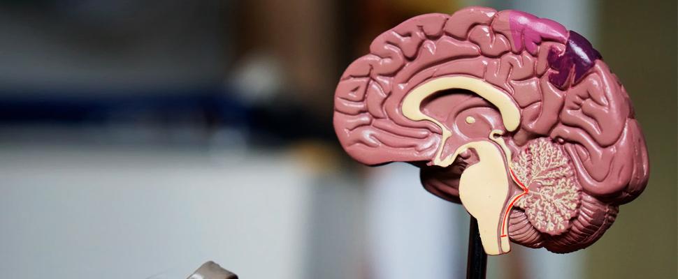 ¿Cómo se ve el cerebro de tus amigos cuando piensan en ti?